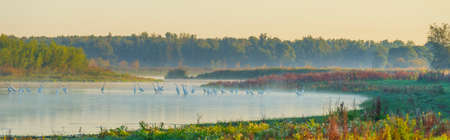 Water birds along the edge of a misty lake in an early summer morning at sunrise, Almere, Flevoland, The Netherlands, September 2, 2020