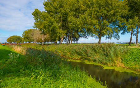 The edge of a lake in a green grassy field in sunlight under a blue sky in autumn, Almere, Flevoland, The Netherlands
