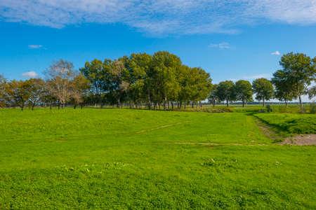 Dike in a green grassy field in sunlight under a blue sky in autumn, Almere, Flevoland, The Netherlands
