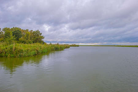 The edge of a lake in a green windy rainy wetland in spare sunlight under a gray white cloudy sky in autumn, Almere, Flevoland, The Netherlands, October 4, 2020 Stok Fotoğraf