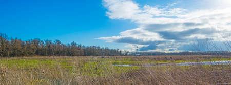 The reedy edge of a lake in a green grassy field in wetland in sunlight under a blue sky in winter, Almere, Flevoland