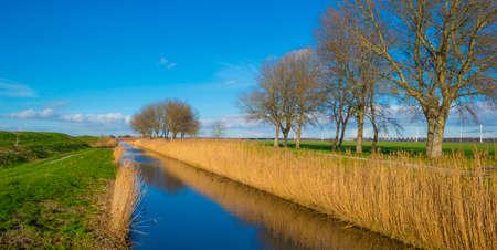 Dike in a green grassy field in wetland in sunlight under a blue sky in winter, Almere, Flevoland Stock Photo