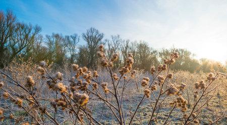 Plants in a frozen field in wetland in sunlight at sunrise in winter, Almere, Flevoland, The Netherlands, January 31, 2021