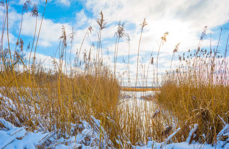 Snowy edge of a snow frozen lake in wetland under a blue white cloudy sky in winter