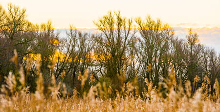 Field with trees, reed and bushes in wetland in sunlight at sunrise in winter, Almere, Flevoland, The Netherlands, February 26, 2021