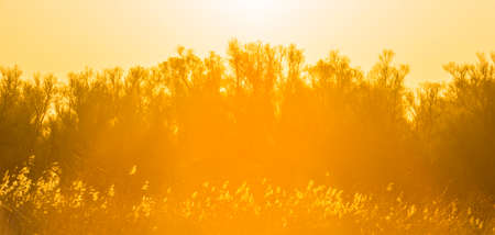 Trees and reed in bright orange yellow sunlight at sunrise in spring, Almere, Flevoland, The Netherlands, April 17, 2021
