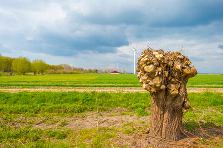 Wind turbine for renewable energy and a knotted willow in an agricultural field in bright orange yellow sunlight in spring, Almere, Flevoland, The Netherlands, April 19, 2021