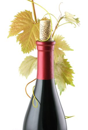 red wine bottle with vine sprout isolated on white
