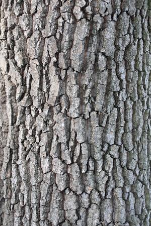 A close-up of an oak tree