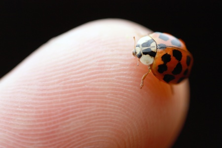 a ladybug sitting on the tip of my finger