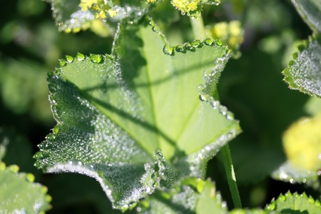 green leaf covered with raindrops Stock Photo - 12930314