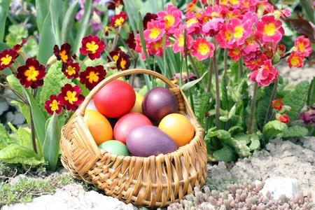 easter egg hunt: basket full of easter eggs