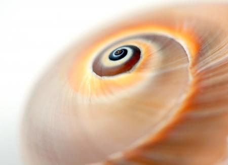 Empty snail shell