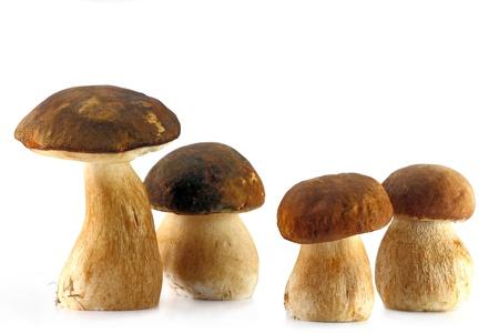 Four porcini mushroom isolaten on wnite