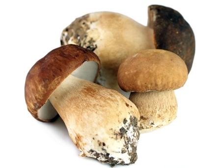 Three porcini mushrooms isolated on white background