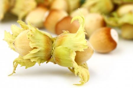 two hazelnuts in front of pile ot hazelnuts