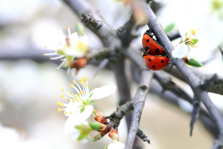 a couple of ladybugs making love in Spring Standard-Bild