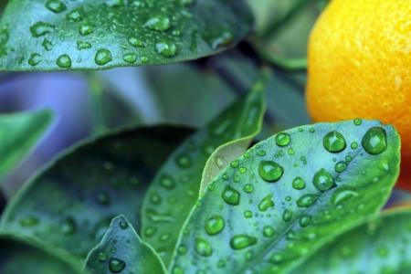 studio shop of green leaf and raindrops