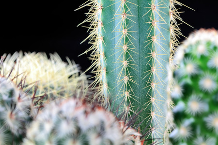 close-up of green cactus on black background
