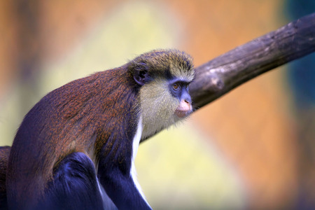 monkey lost in thought, selective focus with copy space