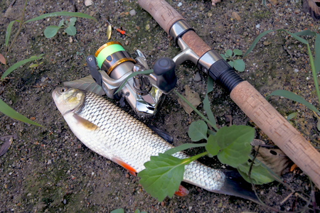 cought fish, near to fishing rod and reel