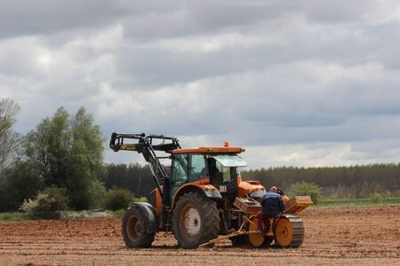Farmers plant trees in a nursery. Using a tractor and a planting wheel that embeds the tree cut directly into the ground. Standard-Bild