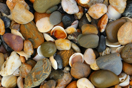Pebbles and shells found on the coast  Stock Photo