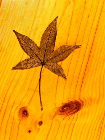 Autumn leaf on a wooden table  Stock Photo
