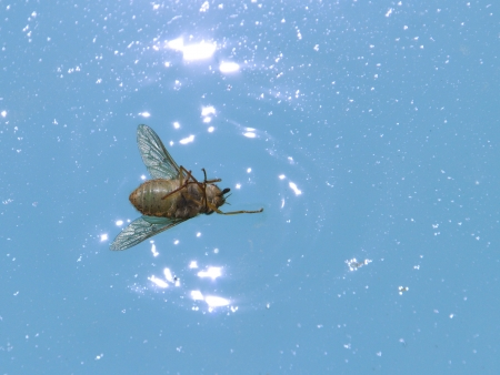 Dead fly on the water  Stock Photo