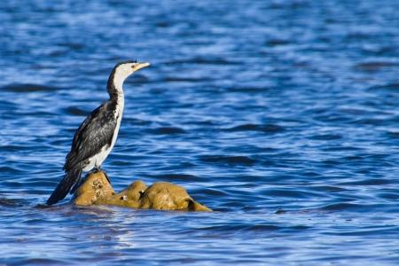 A cormorant sitting on rocks Stock Photo
