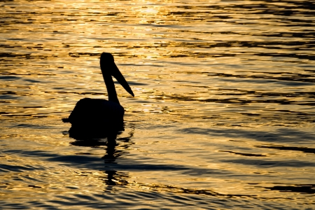 Sunset pelican silhouette Stock Photo