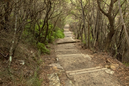 Path on mirky forest