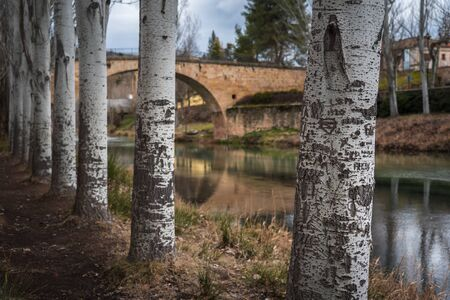 Engraved trees with a calm river passing below a bridge in the background at a winter day Archivio Fotografico