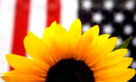Yellow Sunflower Ptriotic American Flag