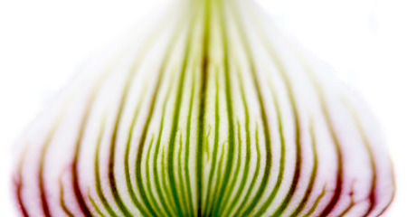 d cor: Orchid Flower Petal Purple and Green Stock Photo