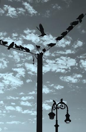 birds on a wire: Birds On Wire