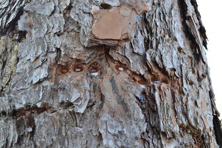 tree with sap Banco de Imagens - 35245122