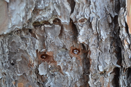 tree with sap