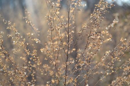zon op plantaardige Stockfoto