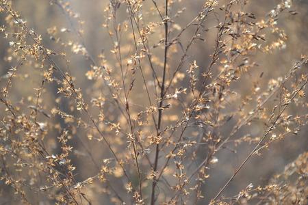 zon schijnen op plantaardige close-up