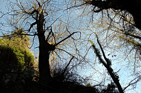 alpujarra: Report on the Alpujarra  Granada  Spain  15 - The trees