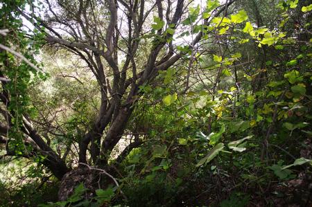 vegetation: Trees and vegetation 7