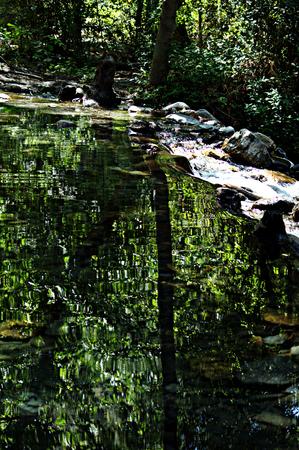 river trunk: River in Guejar Sierra - Granada - Spain