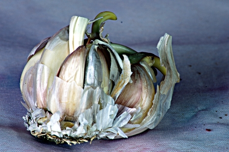 Still lfe with garlic clove Imagens