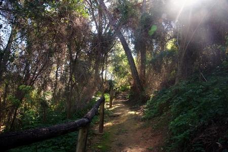 Lonely path in the park of Otomana in Alcala de Guadaira (Seville)