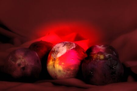 Some rotten peaches on a red background. A still life