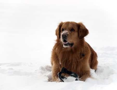 Dog in the snow beautifull photo