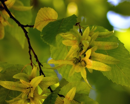 Yellow tree with green background. Stock Photo