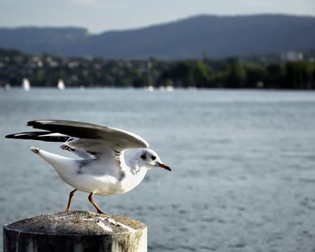 Gull in pier  Stock Photo