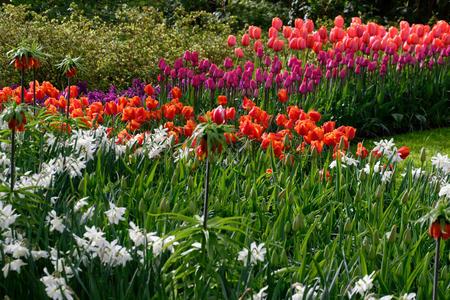 fleur en nederland